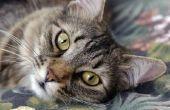 De beste bron van Omega-3 voor katten