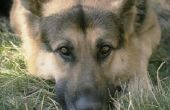 Hoe kunt u zien wanneer de steen bij een hond is verstreken