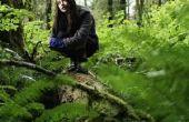 Het gebruik van Roundup om te doden van Moss