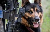 Canine lumbosacrale Disease