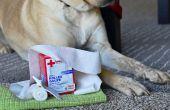 How to Care for bezuinigingen op de neus van een hond