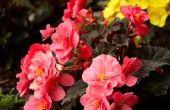 Een lijst met bloemen