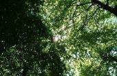 Hoe een Essay te schrijven over bomen voor kinderen
