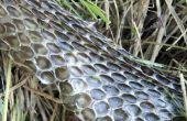 Hoe teken en mijten onder huisdier slangen te behandelen