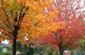 Waarom zet bladeren in de herfst & Look geel & oranje?