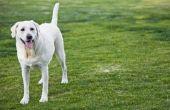 How to Stop honden uit het poepen op gazons