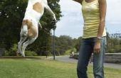 Wat zijn de bijwerkingen van Metacam bij honden?
