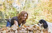 Welke boom bladeren zijn giftig voor honden?