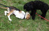 Hoe een hond met een verkoudheid behandelen