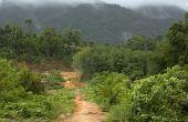 Gemeenschappelijke dieren in het tropisch regenwoud