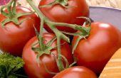 Vruchten & Groenten geteeld in Italië