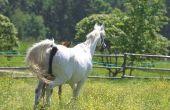 Symptomen van longontsteking bij paarden