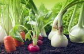 Wanneer te planten groenten in Alabama?