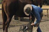 Hoe ik een paard met slechte kniegewrichten schoen?