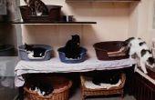 Moet u een zwangere kat isoleren?