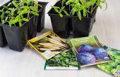 Hoe om te groeien van zaden binnenshuis zonder bodem