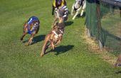 Tips voor het winnen bij hond Races