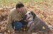 Hoe maak je je eigen hond doekjes
