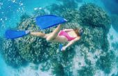 Goed snorkelen uit de kust in Fort Lauderdale, Florida