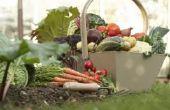 Lijst van gemeenschappelijke tuin groenten