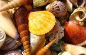 Hoe Open je een Sea Shell zonder breken