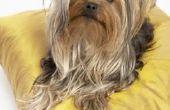 Hoe maak je een Bed van de hond met Cedar schaafsel