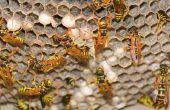 Welke dieren aanval gele jas nesten in de grond?