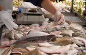 Hoe te bevriezen van verse tonijn