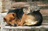 Hoe om te trainen uw hond niet te schors op uw katten