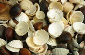 Kunsten & ambachten: How to Make iets van schelpen