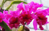 How to Make uw eigen Agar voor orchideeën