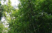 How to Make Bamboo bogen & pijlen