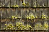 Wat zijn de gevaren van mos op uw dak?