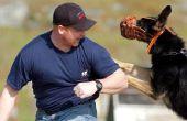 Hoe te muilkorven van een hond te Stop Barking
