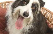 Schoonmaak instructies voor een Kong Chew-resistente Bed van de hond