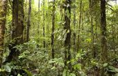Wat zijn de meest gevaarlijke dieren in het regenwoud?