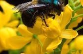 Welke bloemen houdt bijen?