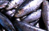 Tips voor het gebruik van Sardines als aas voor de visserij