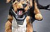 Hoe te stoppen met een hond uit het kauwen op dingen