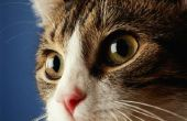 Zijn Matting ogen normaal bij Kittens?