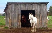 How to Build een eenvoudige één paard schuur