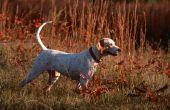 Tips voor het trainen van de hond: Het gebruik van een lange lijn