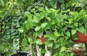 Soorten opknoping van planten