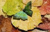 Wat betekenen de kleuren op vlinders?