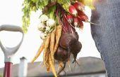 Kan je bieten eten recht uit de grond?