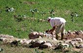 Soorten werk boerderij