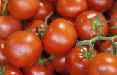 De beste vloeibare meststof voor groenteplanten