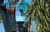 Hulpprogramma's voor het trimmen van een palmboom