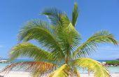 Cruises naar Jamaica uit Florida