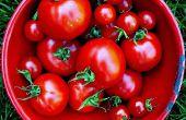 Zelfgemaakte tomaat plantaardige voedsel